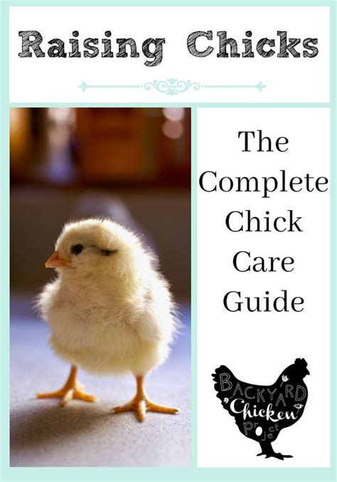 raising chickens 101 bring up baby chicks the old 25 best chick care images on pinterest chicken coops
