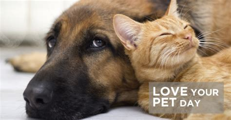 national love  pet day february