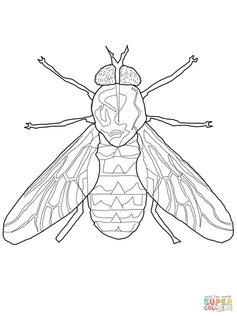 fly coloring printable coloring pages