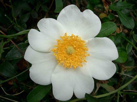 i fiori semplici fiorella gilli vivaio giardino catalogo ricanti