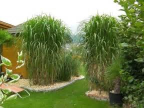 pflanzen im garten garten pflanzen sichtschutz beste garten ideen