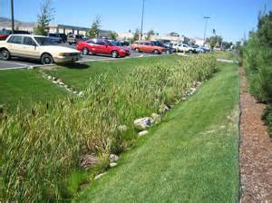 sustainable practices for landscape design vegetated