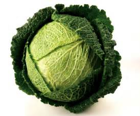 Image result for cabbages images