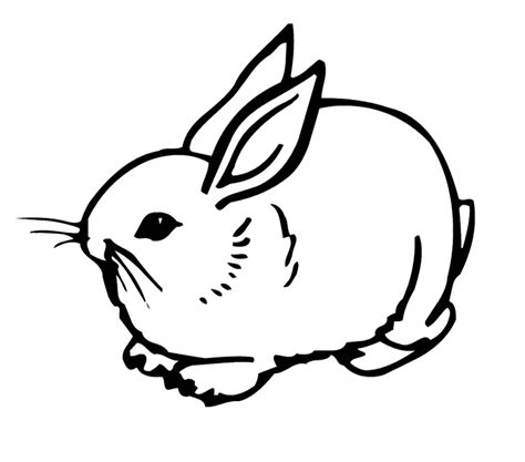 Coloring Page Rabbit by Bunny Rabbits Coloring Pages Az Coloring Pages