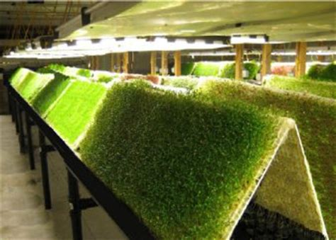 aeroponics agrihouse real solutions nasa sponsored and
