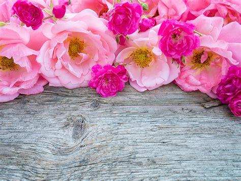 imagenes para fondos de pantalla flores fondos de pantalla rosas muchas rosa color flores