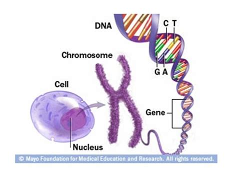 relationship dna six skills to strengthen relationship bonds books living with and neck cancer genetics and cancer