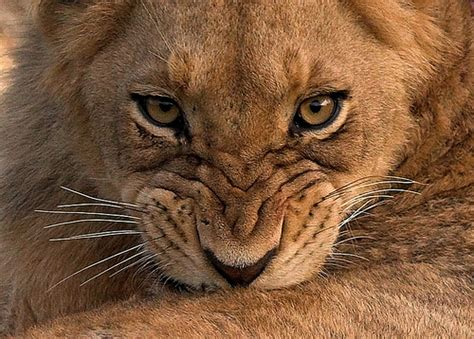 Grrr - I am going to be fierce when I grow up | I'm gonna ... Gonna Get It