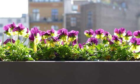 terrazzo fiorito tutto l anno awesome terrazzo fiorito tutto l anno photos idee