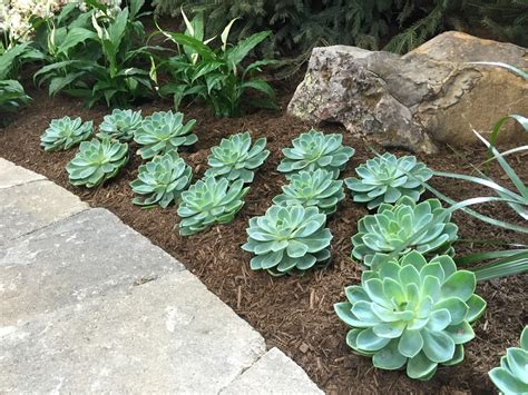 Backyard Rock Garden Ideas Succulents At The 2015 Indiana Flower And Patio Show