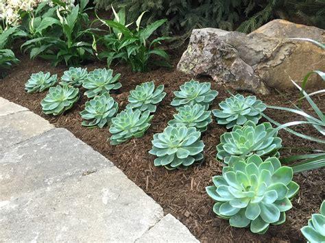 plants for backyard inspirations succulent plants arizona drought resistant