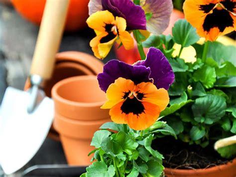 piante da giardino resistenti al freddo piante da giardino resistenti al freddo ecco le pi 249 adatte