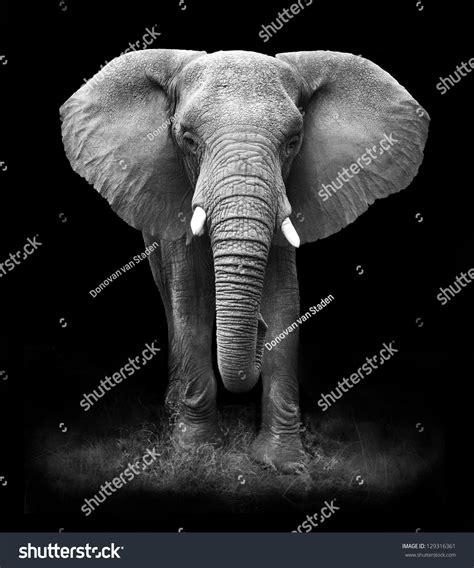 Elephant Stock Photo 129316361 - Shutterstock
