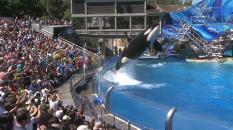 seaworld orlando average attendance seaworld announces plans to double size of killer whale