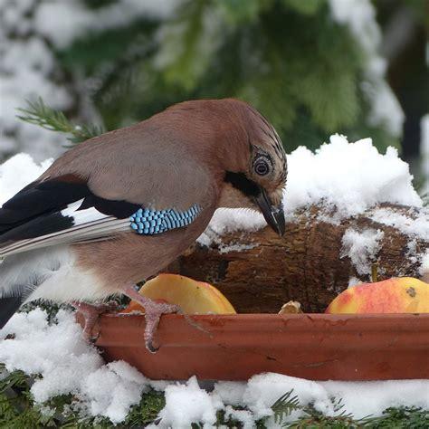 Garten Im Januar by Der Garten Im Januar Tiere Im Frostigen Garten