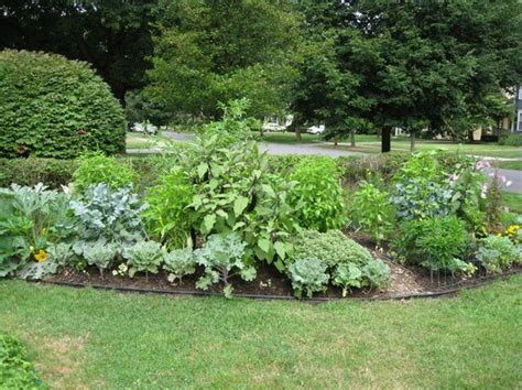 Vegetable Garden In Front Yard Vegetable Garden Grows Happily And Attractively In