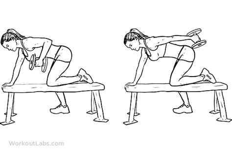 knee on bench dumbbell tricep dumbbell kickbacks workoutlabs