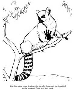 Animal Drawings Coloring Pages  Ring Tailed Lemur sketch template