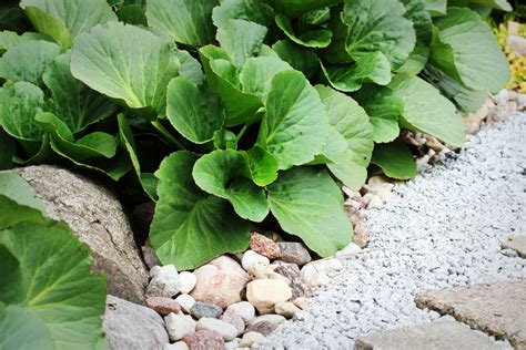Garten Pflanzen Nordseite by Steingarten Auf Der Nordseite 187 Diese Pflanzen Gedeihen Im