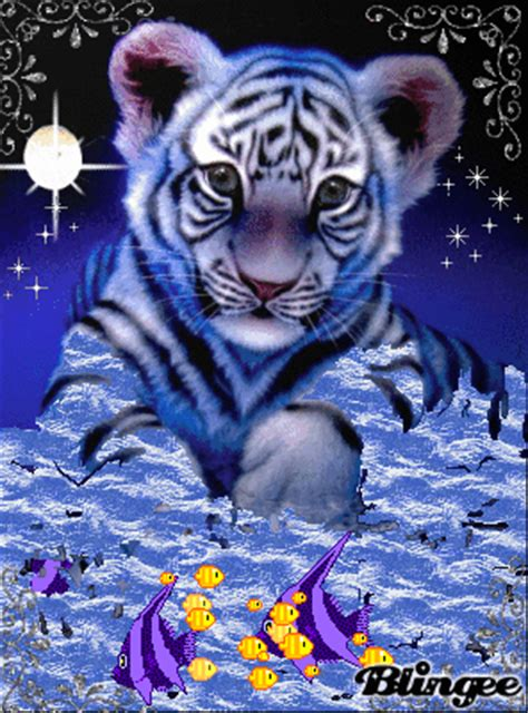 White Tiger Cub Fishing Picture #114987296 | Blingee.com Free Digital Clip Art Maker
