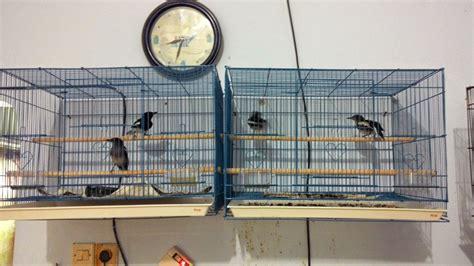 Harga Kandang Burung by Kandang Burung Lovebird Related Keywords Kandang Burung