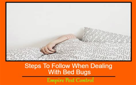 Dealing With Bed Bugs by Steps To Follow When Dealing With Bed Bugs