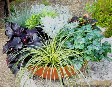 pflanzen bestellen pflanzen bestellen blumenk sten mix