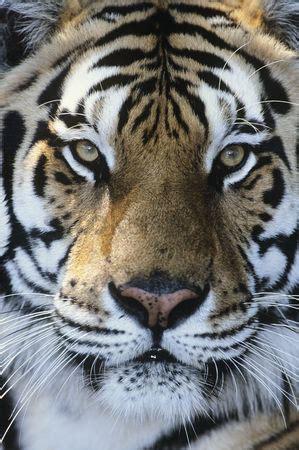 animals wildlife stock vectors stockunlimited