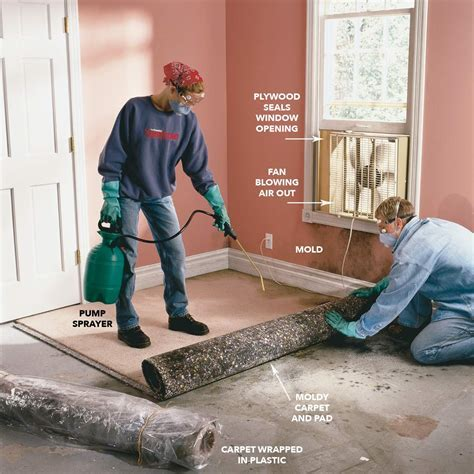 how to remove mould from carpet   www.stkittsvilla.com