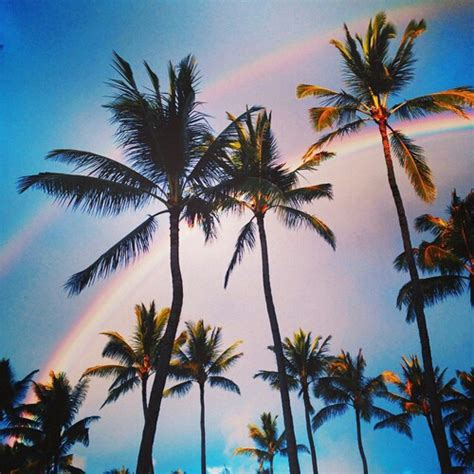 summer vibes palm trees hd aesthetic blue nature palm pastel image 3931996 by