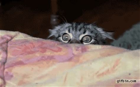 Sneaky Cat Meme - sneaky gif find share on giphy