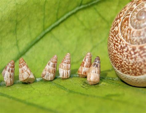 lumache in giardino lumache di giardino bambino che vanno a casa immagine