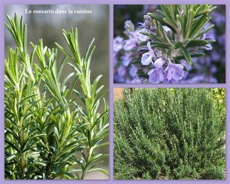 herbe aromatique cuisine le romarin dans la cuisine herbes aromatiques suite