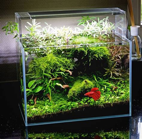oliver knott aquascaping 9 best images about nano cube on pinterest minis rod
