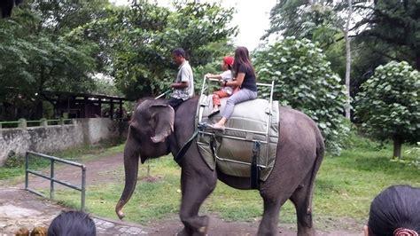 petisi siti nurbaya bakar ban elephant rides