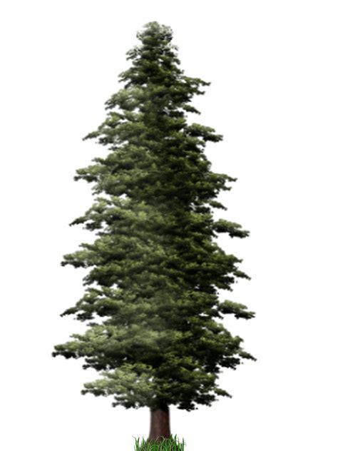 pine tree pine tree png images