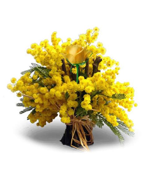 mazzo di fiori con mimose mazzi di fiori e bouquet di mimosa per festa della donna