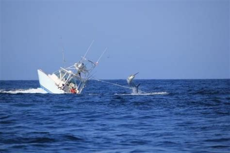 fishing boat sinks moby dick 2 0 black marlin sinks fishing boat off the