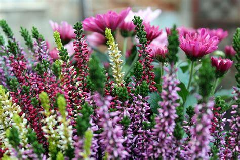 fiori e piante autunnali fiori autunnali 7 piante che colorano l autunno