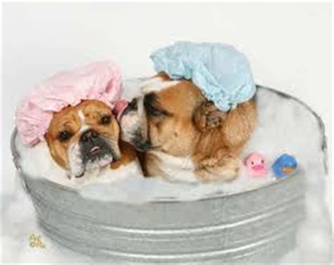 2 Dogs In A Bathtub sibling saturdays in bathing my second home