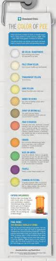 what color is urine supposed to be is your the right color infographic popular science