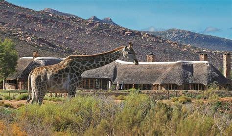 Aqilla Cape aquila reserve safari big 5 wildlife cape town safari day trips