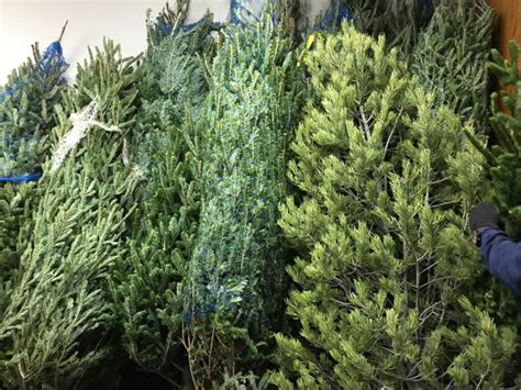 3 colo cities to begin recycling holiday trees