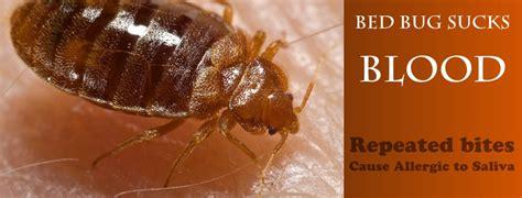 bed bug registry nc bedbug control
