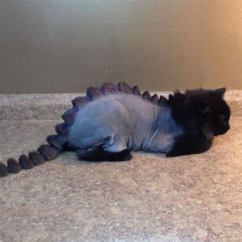 how to your to like cats would you cut your cats hair like a dinosaur by instagram picgist i don t