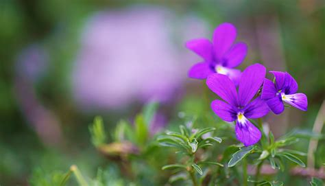 sentiero dei fiori orobie valle brembana sul sentiero dei fiori quello basso