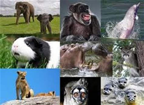191 que comen los animales vertebrados 191 de que se alimentan eut 233 rios caracter 237 sticas dos eut 233 rios alunos online