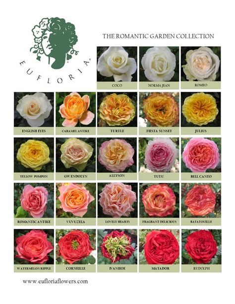 17 best images about raw florals and greens on pinterest pink roses garden roses and early grey