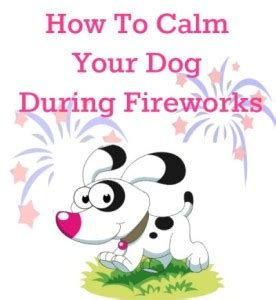 calming dogs during fireworks the savvy age food family diy