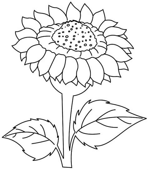 coloring pictures of sunflowers sunflower coloring pictures az coloring pages